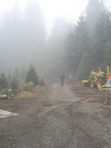 A photo of me walking through the fog at the WSU Farm Tour. This is a small Christmas tree Farm outside of Auburn, Washington. Photo by my friend Katherine, taken October 7, 2006.