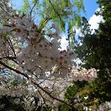 2014 Japan - Dag 7 - danique-DSCN5861.jpg