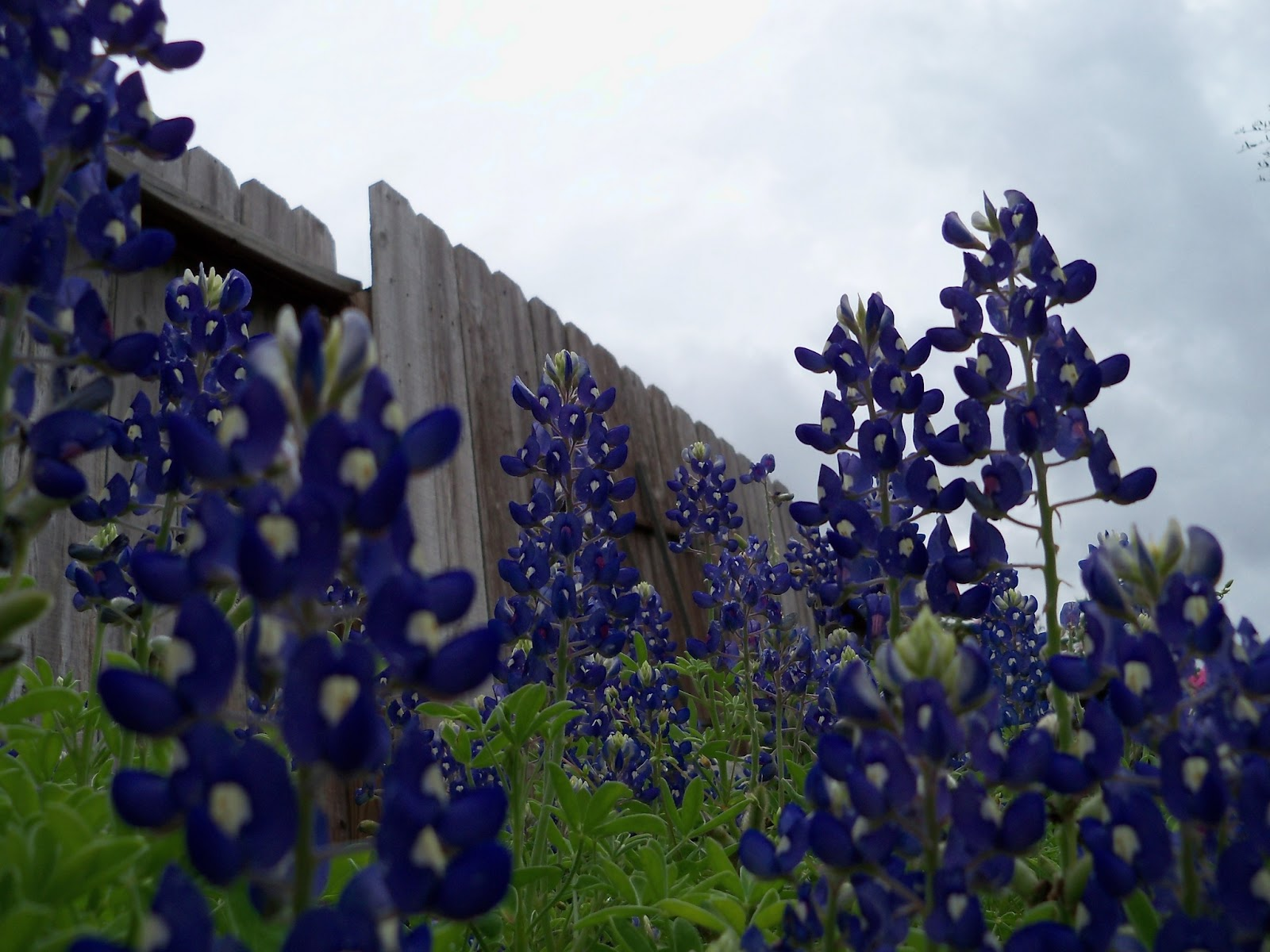 Gardening 2012 - 115_1318.JPG