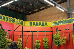 Champion bananas at the Australian Banana Championship