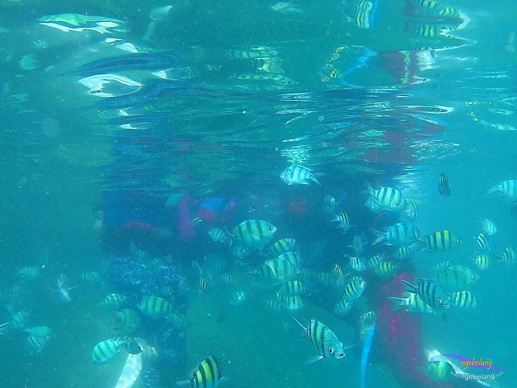 pulau harapan, 29-30 agustus 2015 SJCam 02