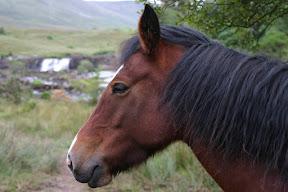 Horse near Ashleagh Waterfalls