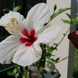 Gardening 2011 - 100_7487.JPG