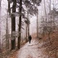 Tema A - Ana Longin, Snovi iz šume - Medvednica, 05.01.2016.