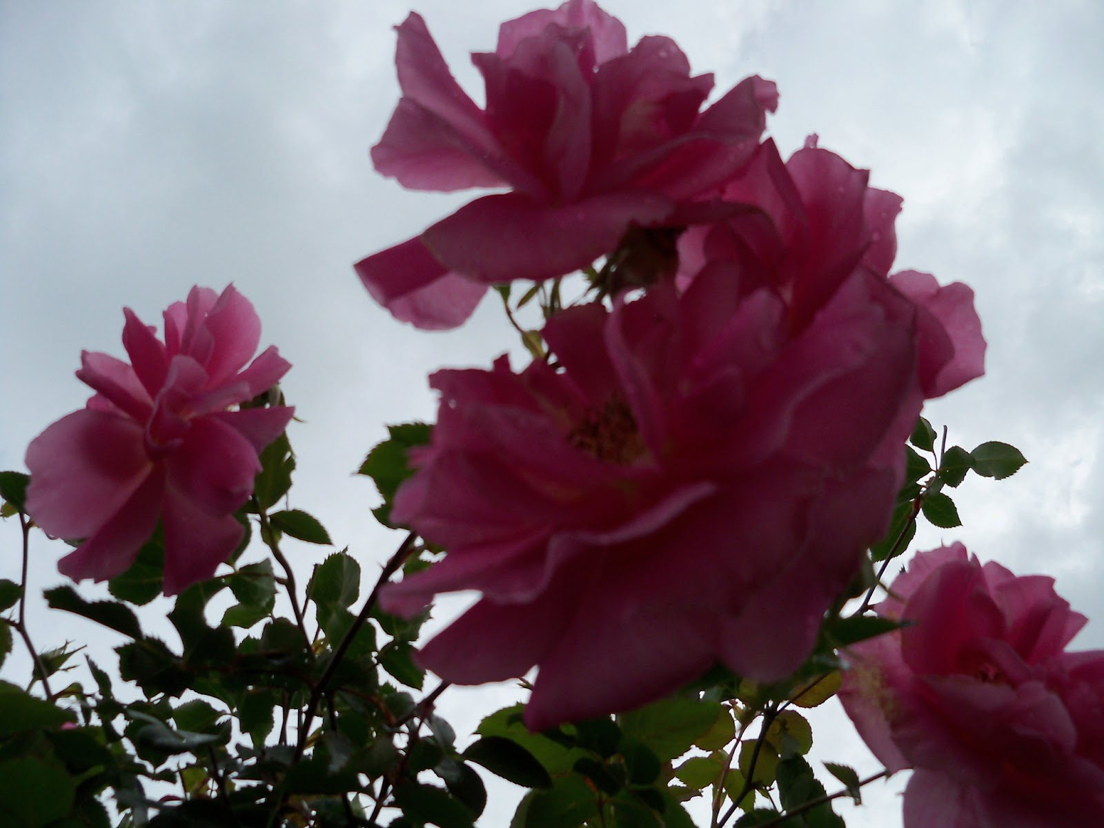 Gardening 2012 - 115_1350.JPG