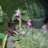 Gardening 2012 - IMG_2772.JPG