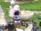 Кормим наглых птичек
