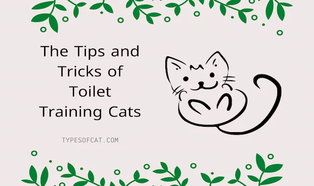 The Tips and Tricks of Toilet Training Cats