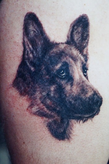 German Shepherd #2