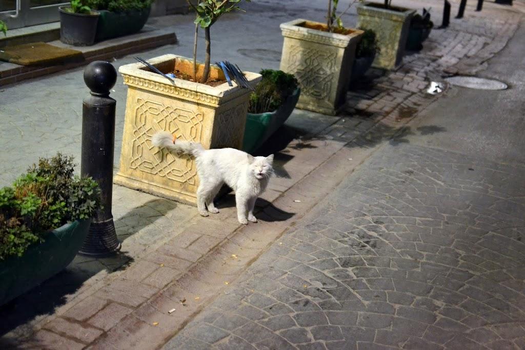 Best photos, Gaziantep - DSC_2165
