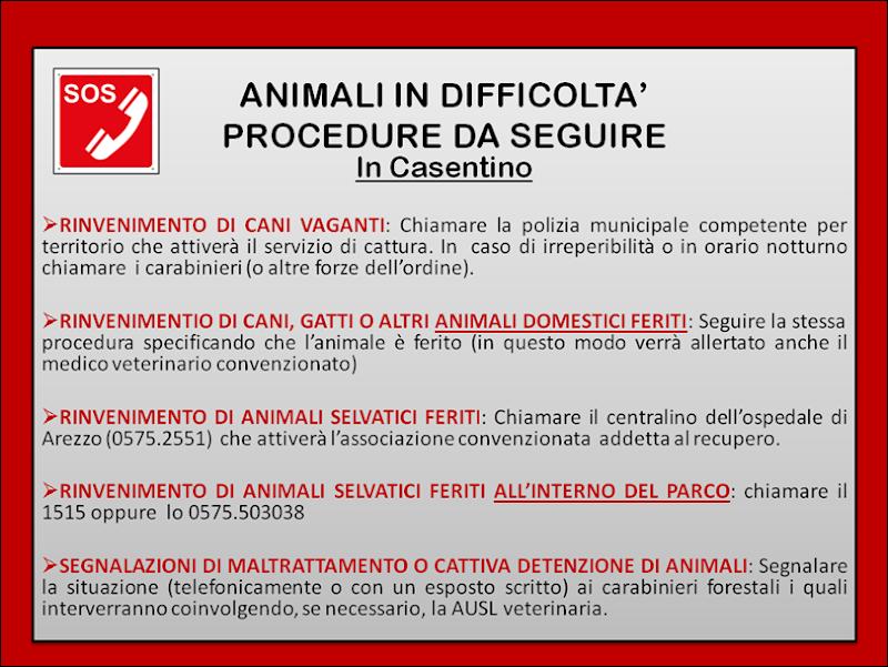 EMERGENZA ANIMALI IN DIFFICOLTA' 2