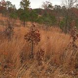 Hunting Habitat 7, Anderson Creek
