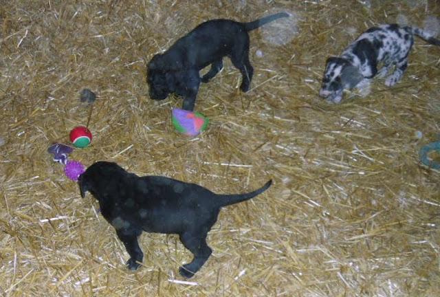 Gretta & Cobalt Blues 3/24/12 litter - SAM_3360.JPG