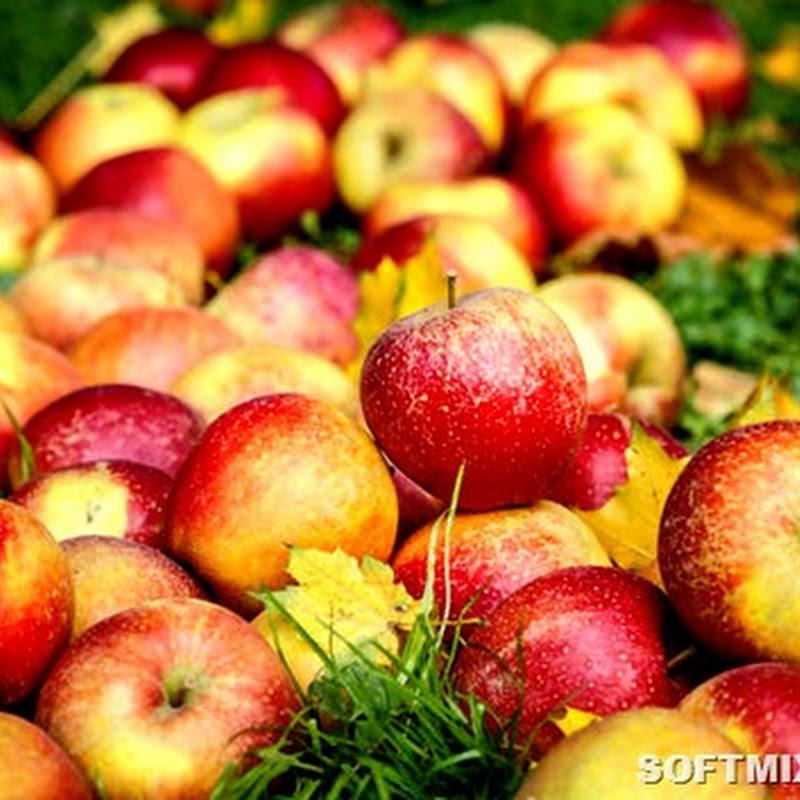 Какие фрукты самые вредные