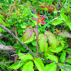 weed-patch-IMG_1040.jpg