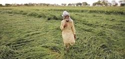 किसानों पर फिर कुदरत का कहर
