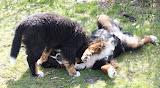 – Ganni og mor Lua elsker at tumle