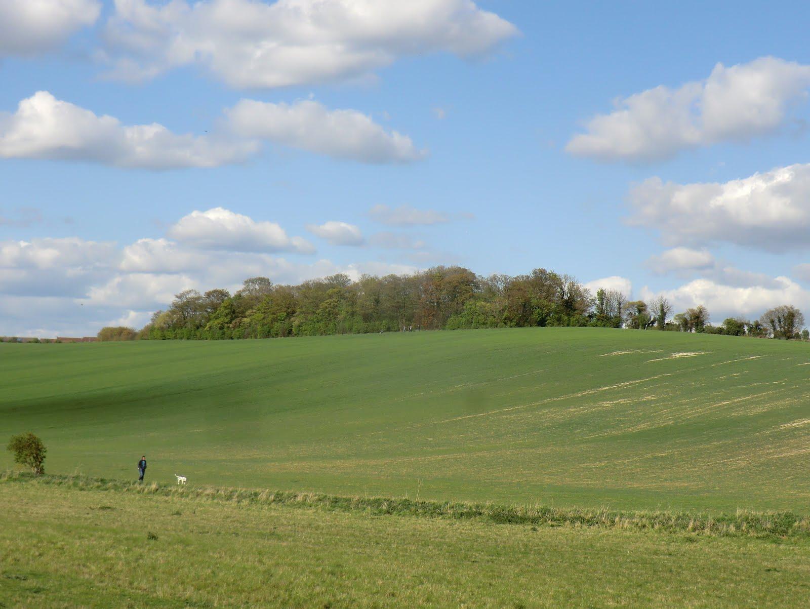 CIMG9797 Essex farmland in early spring