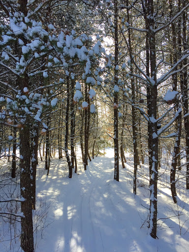 Through the pines and protected from the chill!