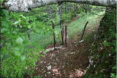 Paso de alambrada en el hayedo