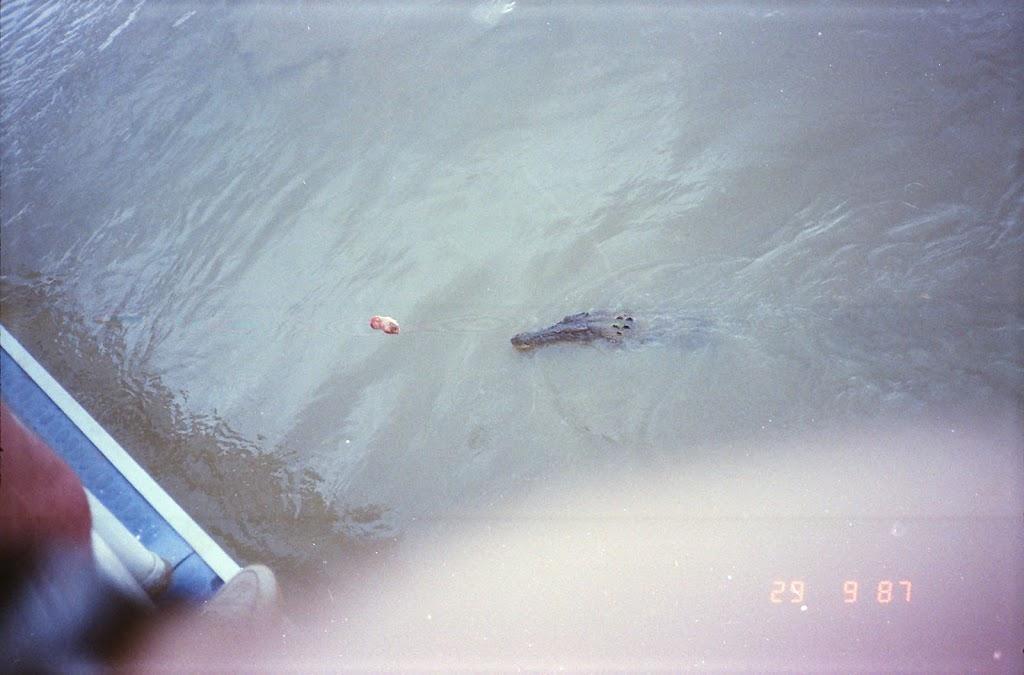 6150Adelaide River Croc Tour