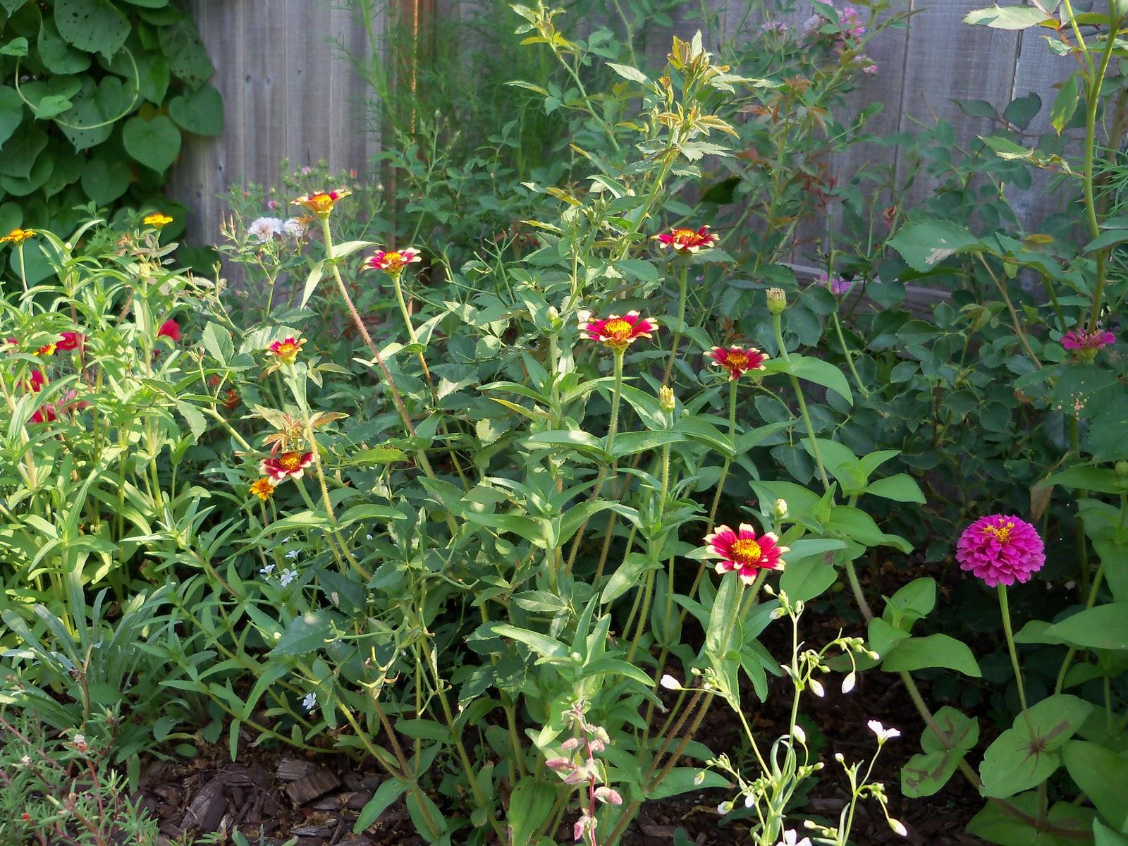 Gardening 2010, Part Two - 101_3029.JPG
