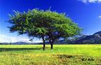 Arbre solitaire dans la savane du Swaziland