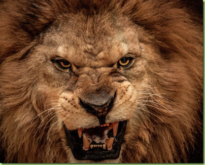mad lion