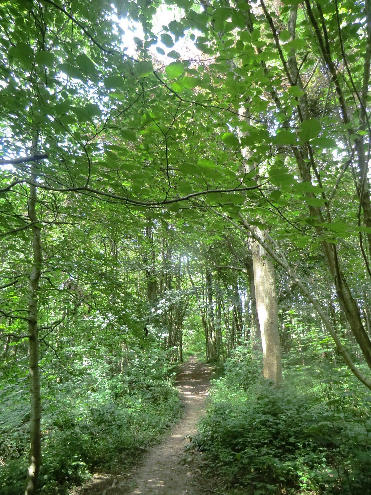 CIMG4067 Through New England Wood