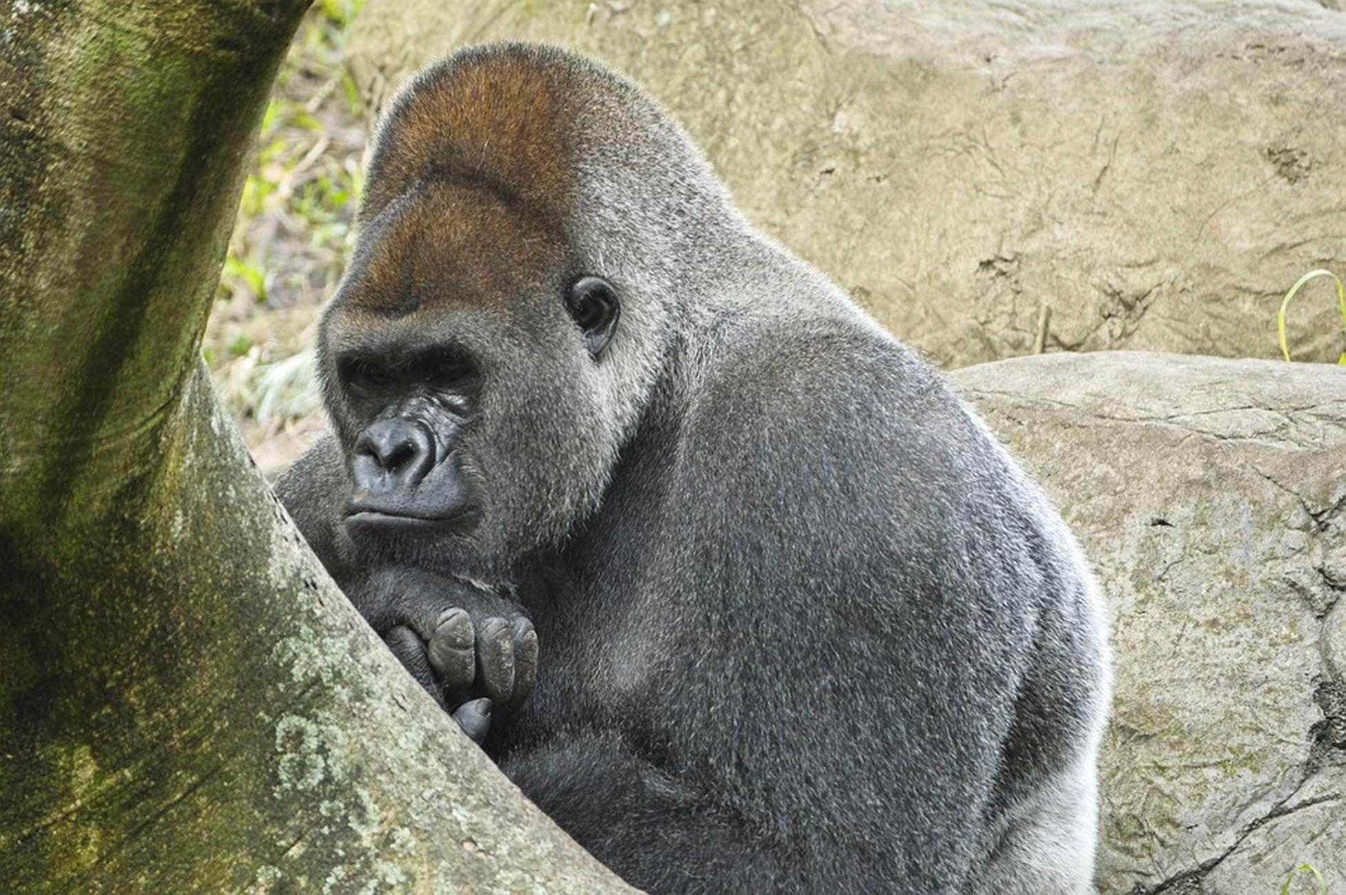 Gabon, Africa