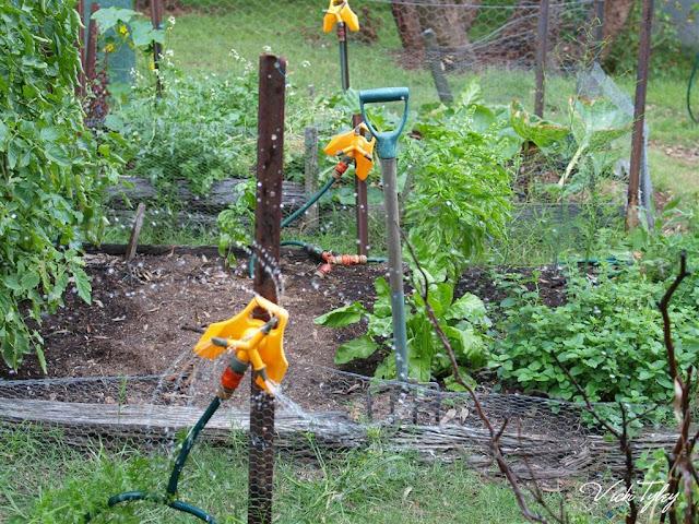 Watering Vegetable Garden