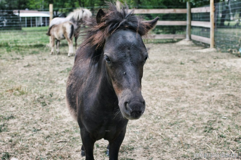 Sergio the baby pony