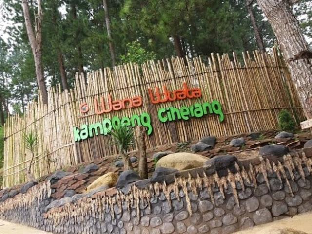 Tempat Wana Wisata Kampung Ciherang, Hamparan Pohon Pinus Untuk ber Selfie ria