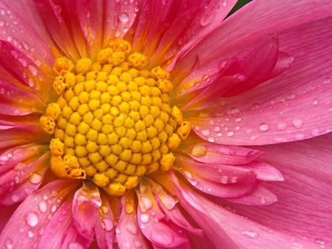 Subiaco Florist: Preferred Flowers From Australia