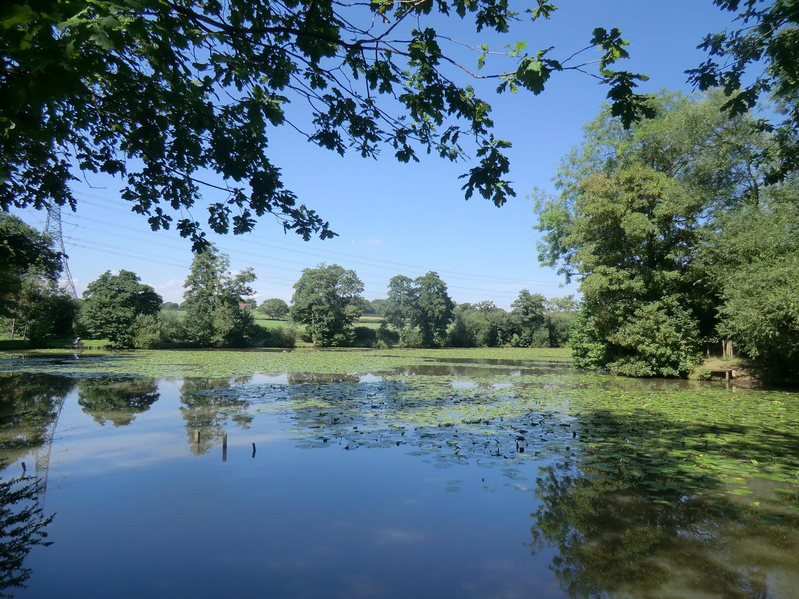 CIMG3359 Valebridge Mill Pond