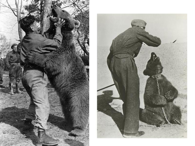 wojtek-soldier-bear-9