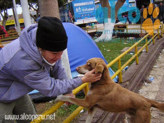 1era visita asistencia animales damnificados terremoto  Pisco 2007 (9)