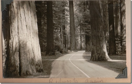 Redwoods Again