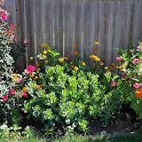 Gardening 2011 - 100_8997.JPG