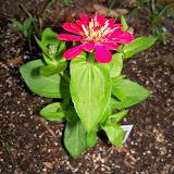 Gardening 2014 - 116_1139.JPG