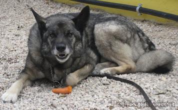 Photo: När vi kommer hem sätter vi oss ute en stund, Rozz blir glad att få en morot att gnaga på....