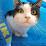 Gerritt Lighthart's profile photo