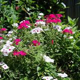 Gardening 2013 - 115_6257.JPG