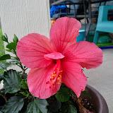 Gardening 2014 - 116_1750.JPG