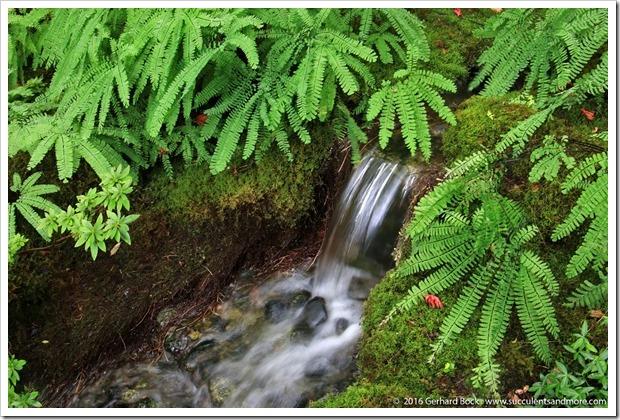 160906_Butchart_Gardens_0123