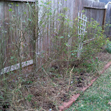 Gardening 2013 - 115_5127.JPG
