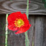 Gardening 2011 - 100_8090.JPG