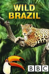 BBC Wild Brazil - Thiên Nhiên Hoang Dã Brazil