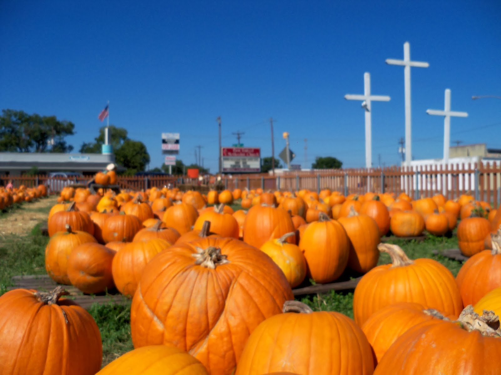 Pumpkin Patch - 115_8278.JPG