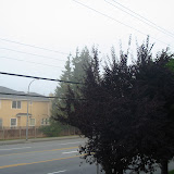 The World in Fog